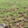 Bei dieser Wiese ist das Gras überall mit 10 cm tiefen Furchen durchzogen.