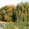 Vegetation im Herbst