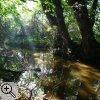 Ausschnitt des Auenwaldes im Kerpener Bruch