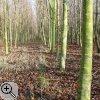 Im Rahmen des Waldvermehrungsprogramms gepflanzte Bäume
